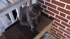 indifferent cat on box