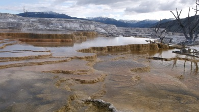 upper terrace mammoth hot springs yellowstone
