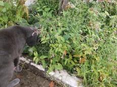2017 cat in garden 1