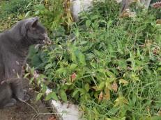 2017 cat in garden 2
