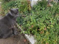2017 cat in garden 3