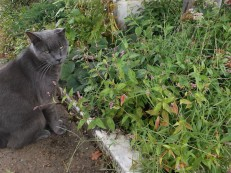 2017 cat in garden 4