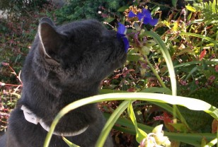 fog cat blue flower
