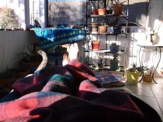 1 amana woolen cat tea