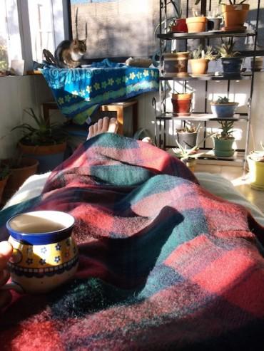 2 amana woolen cat tea