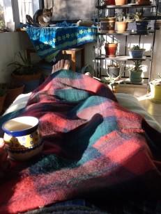 3 amana woolen cat tea