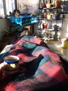 4 amana woolen cat tea