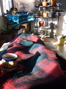 5 amana woolen cat tea