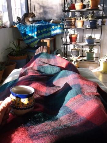 6 amana woolen cat tea