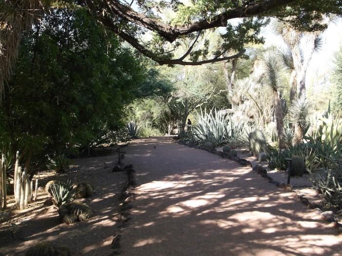 Desert Botanical Garden Phoenix 4